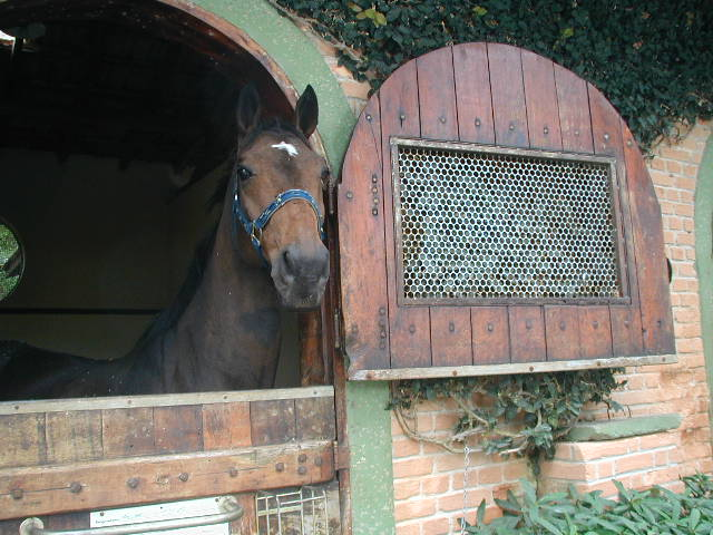 a passion for horses since childhood Marcel jordan horse transport has developed with passion and concern for [your] horses and bea has been devoted to horses since her early childhood years.