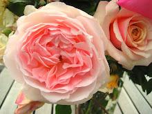 Foto-album: De Dag van de Rozen / The Day of the Roses