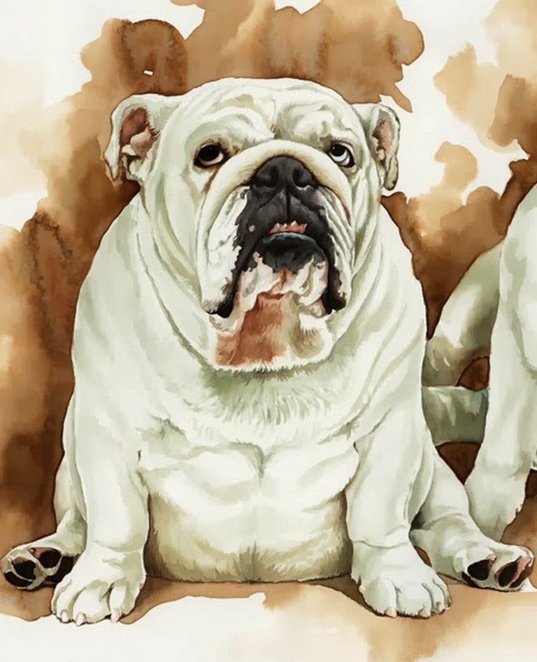 pinturas-caninas