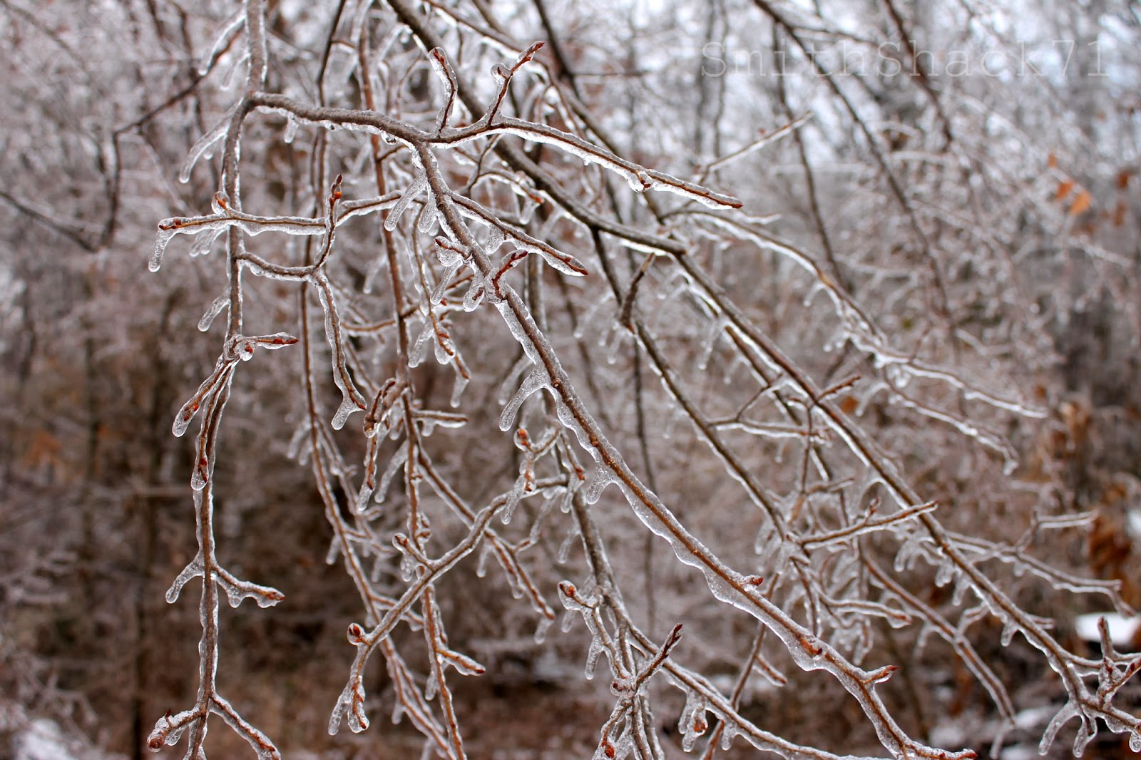 frozen tree