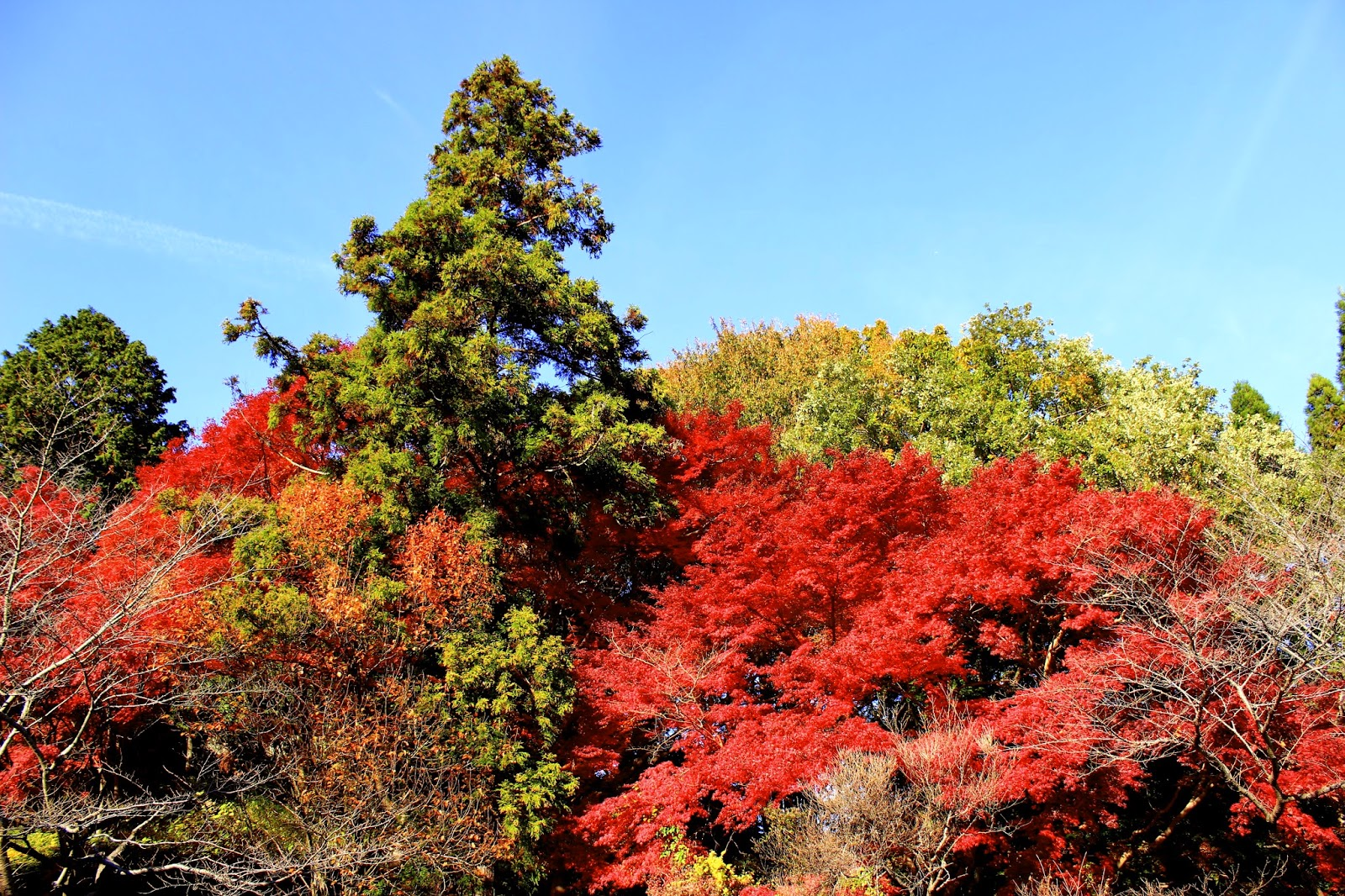 Fall Mood | Autumn in Japan