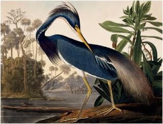 Audubon, ornithologue