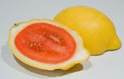 Buah Lemato, Hasil Silang Lemon dan Tomat