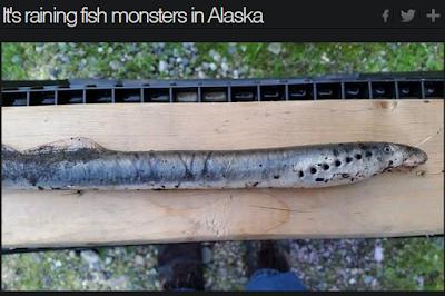 Pesce vampiro che succhia sangue e 'vola', terrorizza l'America