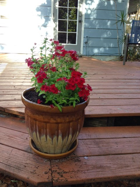Back Deck Potted Plant