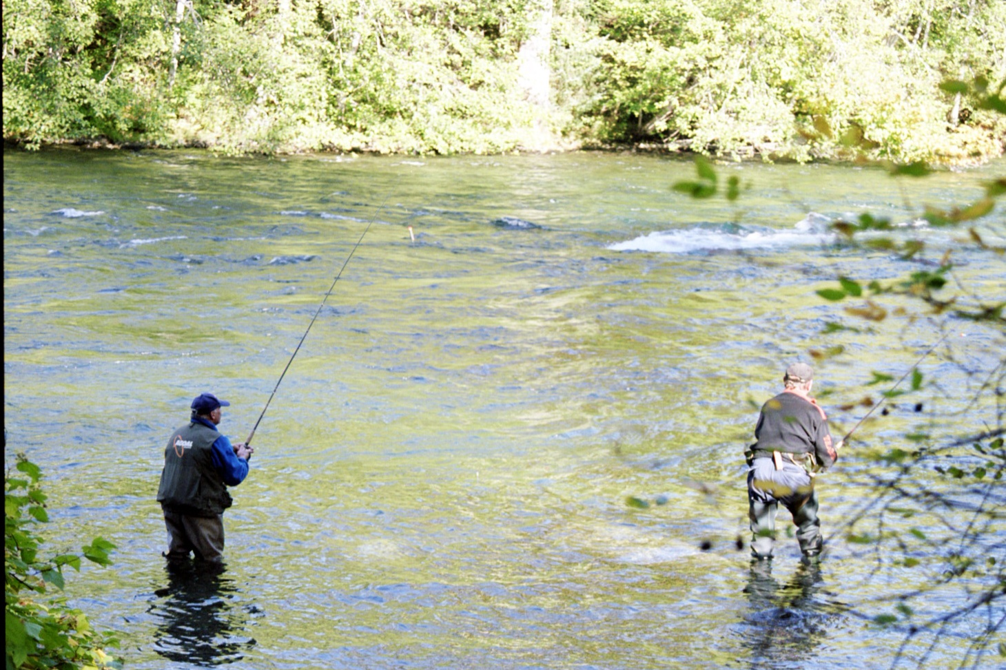 Bc oceanfront river fishing vancouver island for Vancouver island fishing