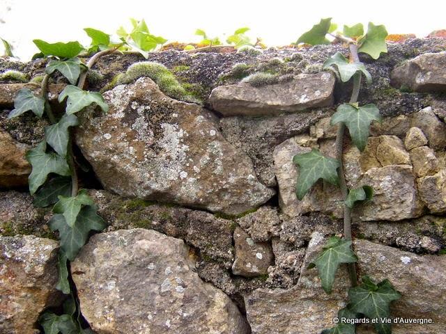 Lierre et mur