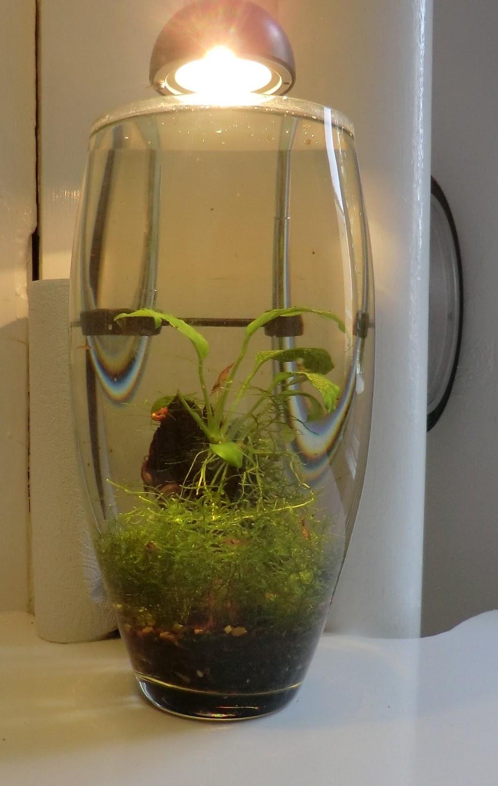 Fish for unfiltered tank - Cheap Nano Shrimp Experiment