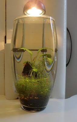 Cheap Nano Shrimp Experiment
