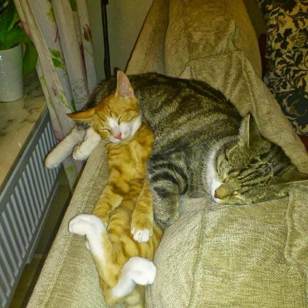 Silas & Zoey
