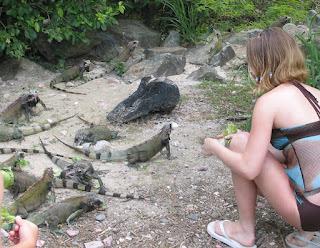 Iguana pics