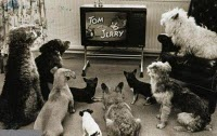 Tom & Jerry time...