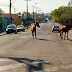 Cuidados ao avistar animais na rua, já que os donos não se tocam e deixam cavalos passearem por aí