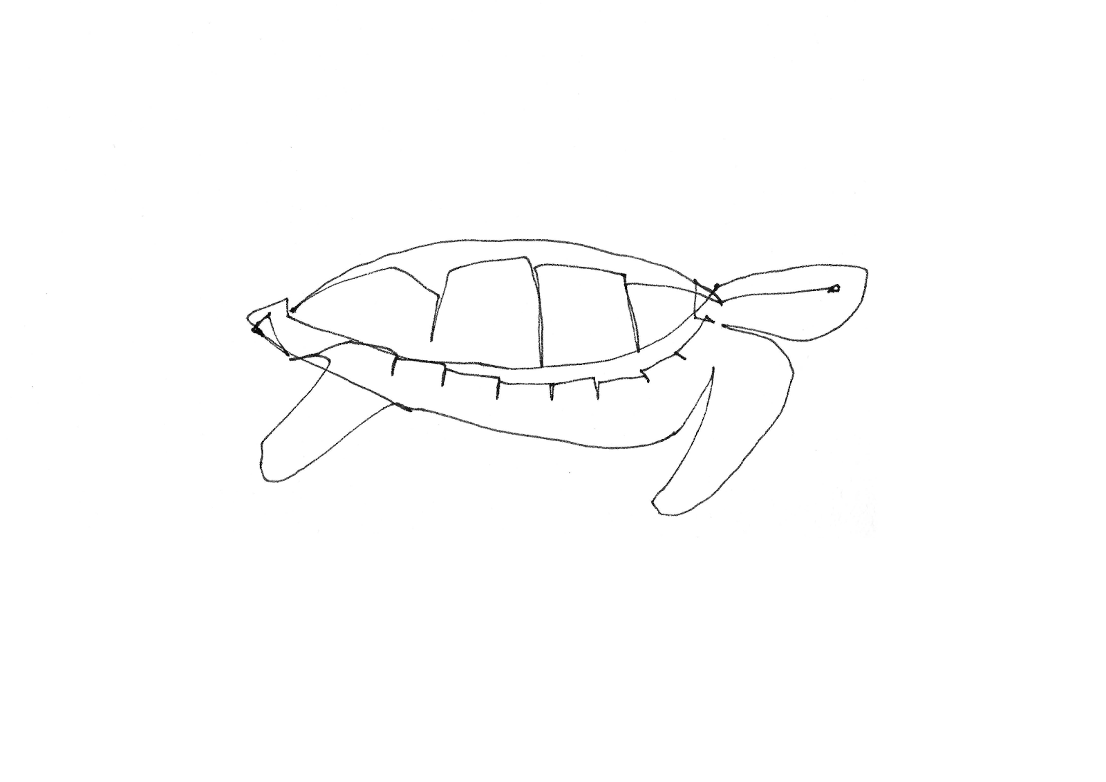 Line Drawing Turtle : Single line drawings turtles for tim