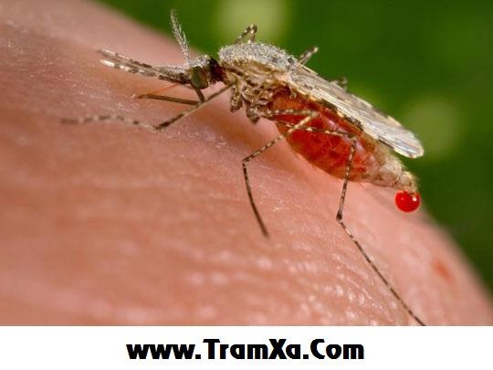 Bị Dengue xuất huyết & cách phòng chữa trị bệnh