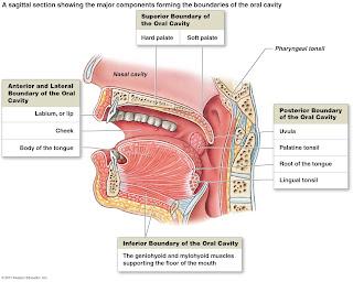 tips kesehatan mulut, tips halitosis, menjaga kesehatan mulut, bau naga