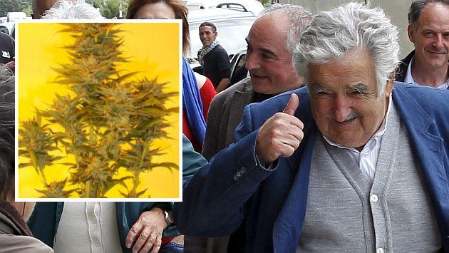 Mujica Gold semente de maconha homenageia José Pepe Mujica