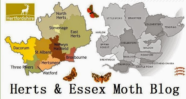 Herts & Essex Moth Blog
