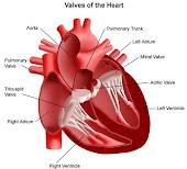 Mengelak dari Serangan Jantung