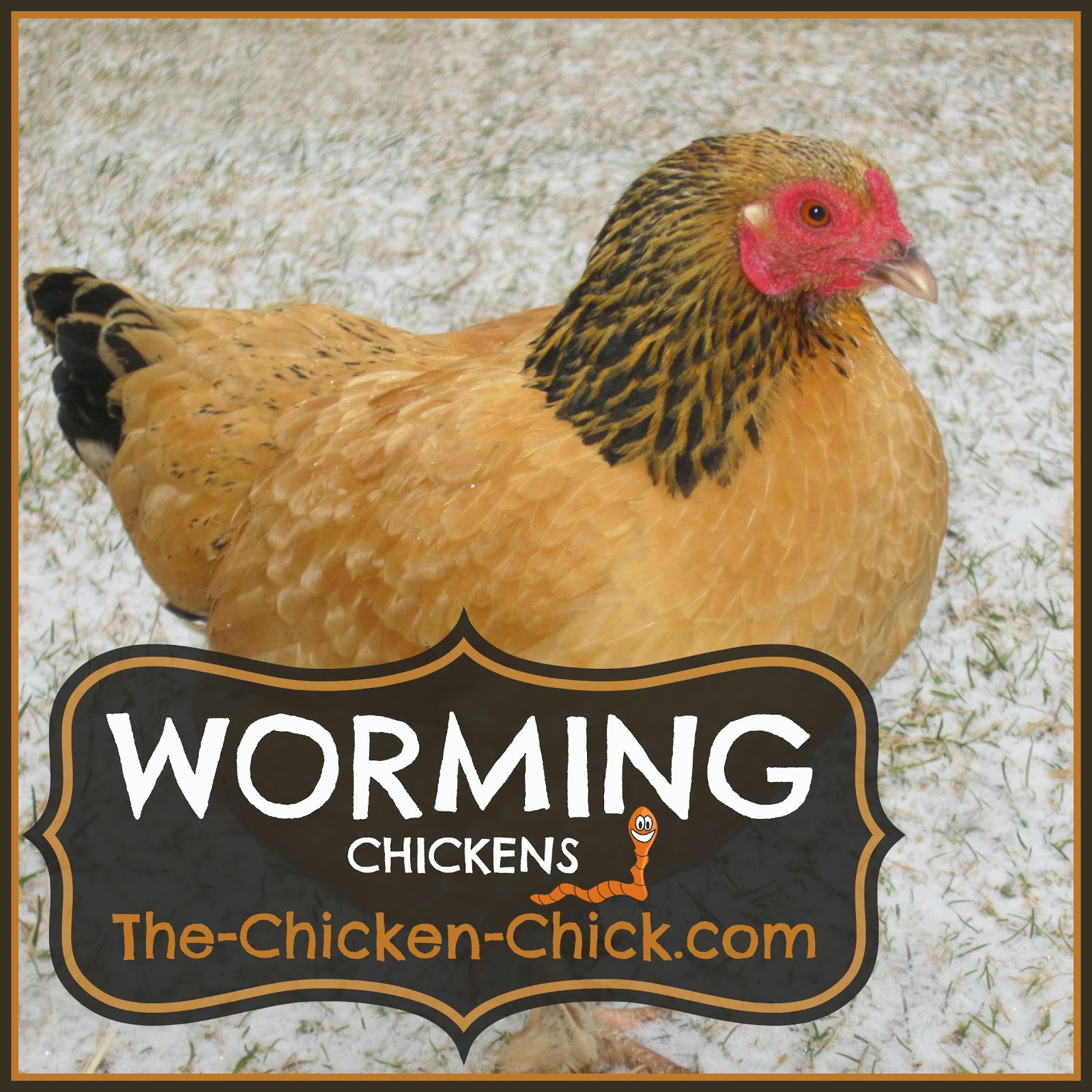 WORMING Chickens