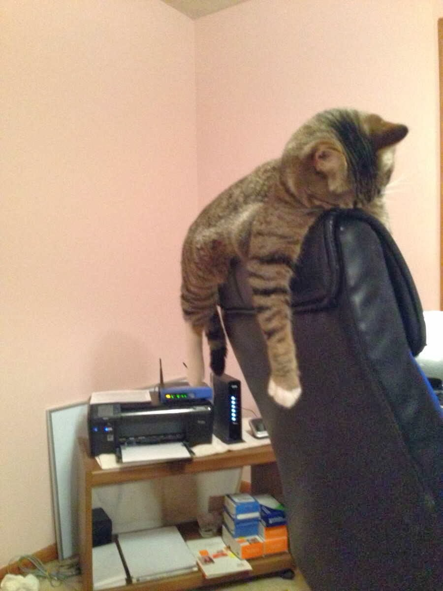 Funny cats - part 83 (40 pics + 10 gifs), cat pics, cat sleeps on chair head
