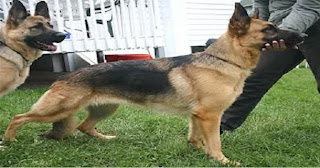 هل تعلم لماذا نهانا سيدنا محمد (عليه الصلاة و السلام ) عن لمس الكلاب ؟؟