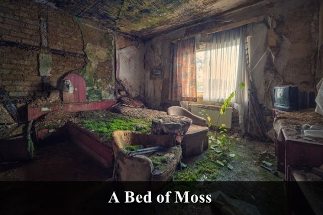 a bed of moss