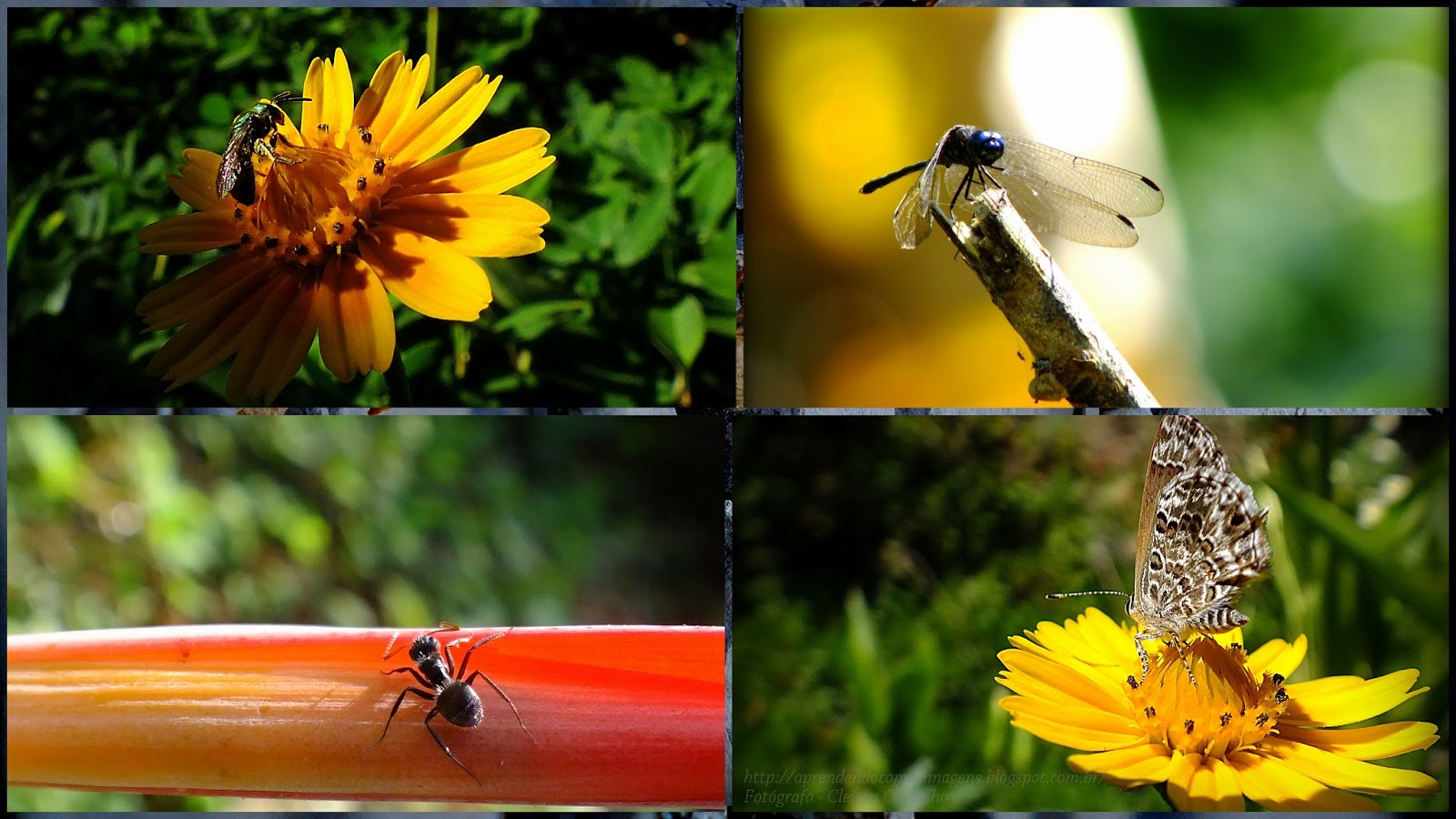 http://aprendendocomasimagens.blogspot.com/2013/09/o-principio-da-vida-com-o-calor-das cores e o perfume das flores. htm Vem anunciar o desabrochar da Vida trazendo com ela a Primavera...html