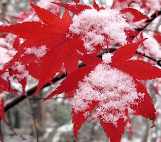 efek salju bertaburan