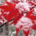 Cara Membuat Efek Salju, Daun, Bintang Berjatuhan
