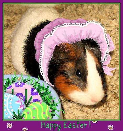 Photos: Adorable Pets Celebrate Easter