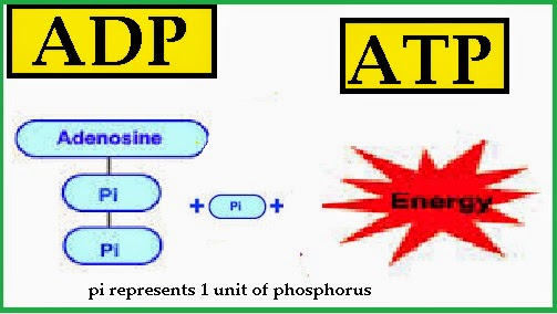 Adp Biology Pictures to Pin on Pinterest - PinsDaddy