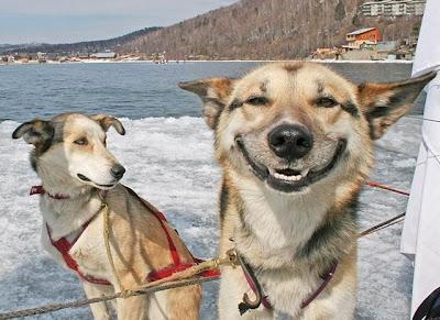 LOL Imagenes chistosas de animales...