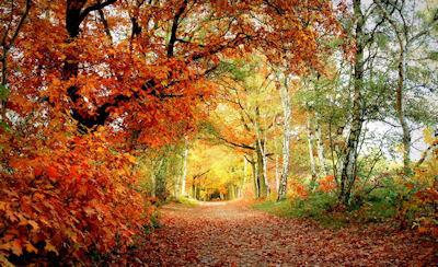 Belleza de Otoño - Autumn Beauty - Paisajes