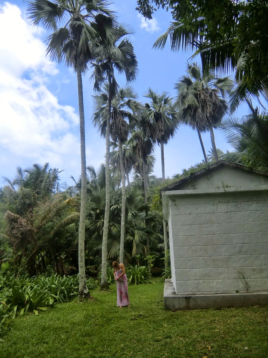 Пальма-Коко-де-Мер