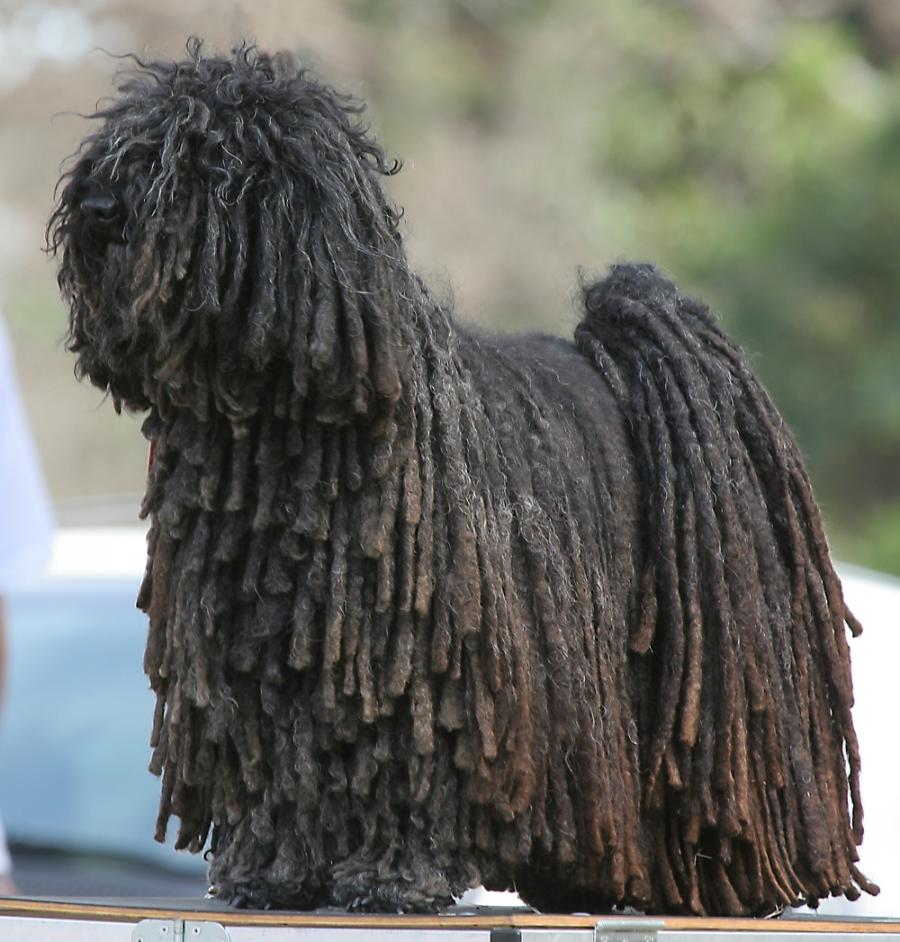 Artistry of Man: Artistry of Textures Lil Wayne Dreads Braided