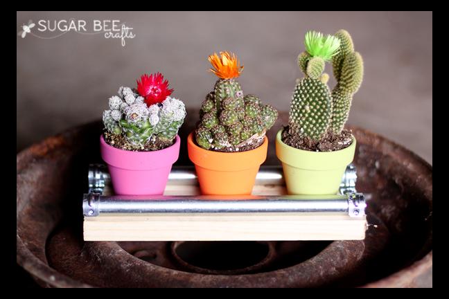 mini+cactus+display+board.png