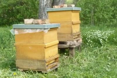 Bienenstöcke im Frühling auf der Wiese