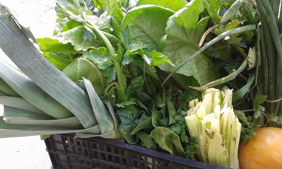 Fent Camí - Verdures ecològiques