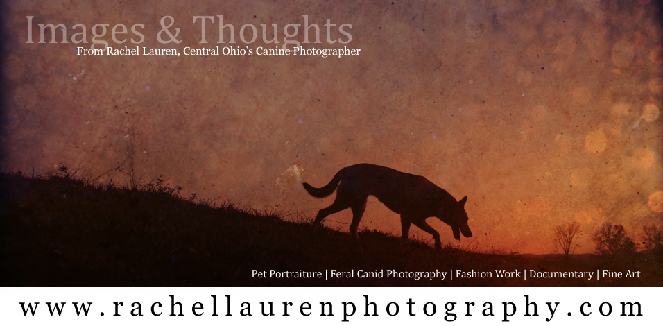 Rachel Lauren Photography - Central Ohios Canine Photographer, Ohio Pet Photography