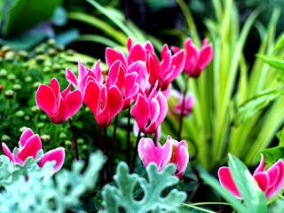 Soñar con Plantas