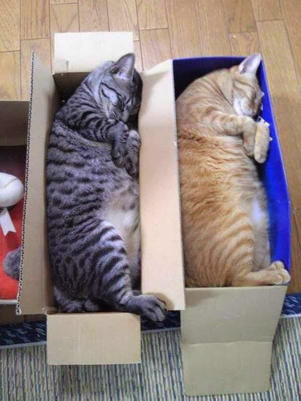 Funny cats - part 83 (40 pics + 10 gifs), cat pics, cats sleep in boxes