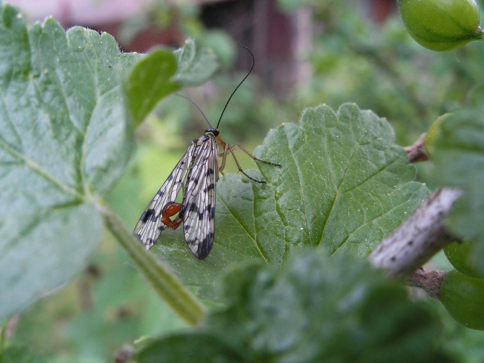 Como en casa insectos - Eliminar insectos en casa ...
