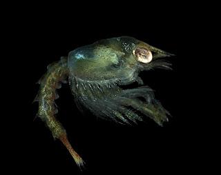 Préférence Revue de presse 2012 (7) : Aquaculture, conchyliculture  OJ78