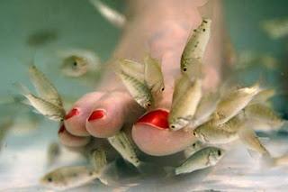 Peixe Pedicure
