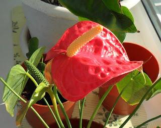 06.11. Не перестаю удивляться этим скромным цветкам! Только природа может создать такую красоту!