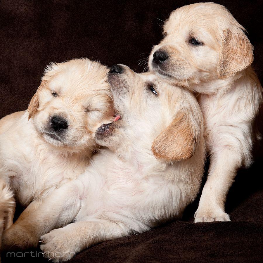 12. Puppies by Martin Hahn