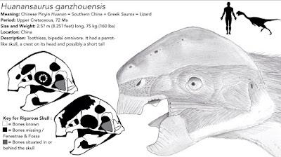 Huanansaurus skull