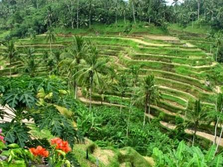 Ubud : wisata seni dan budaya di bali