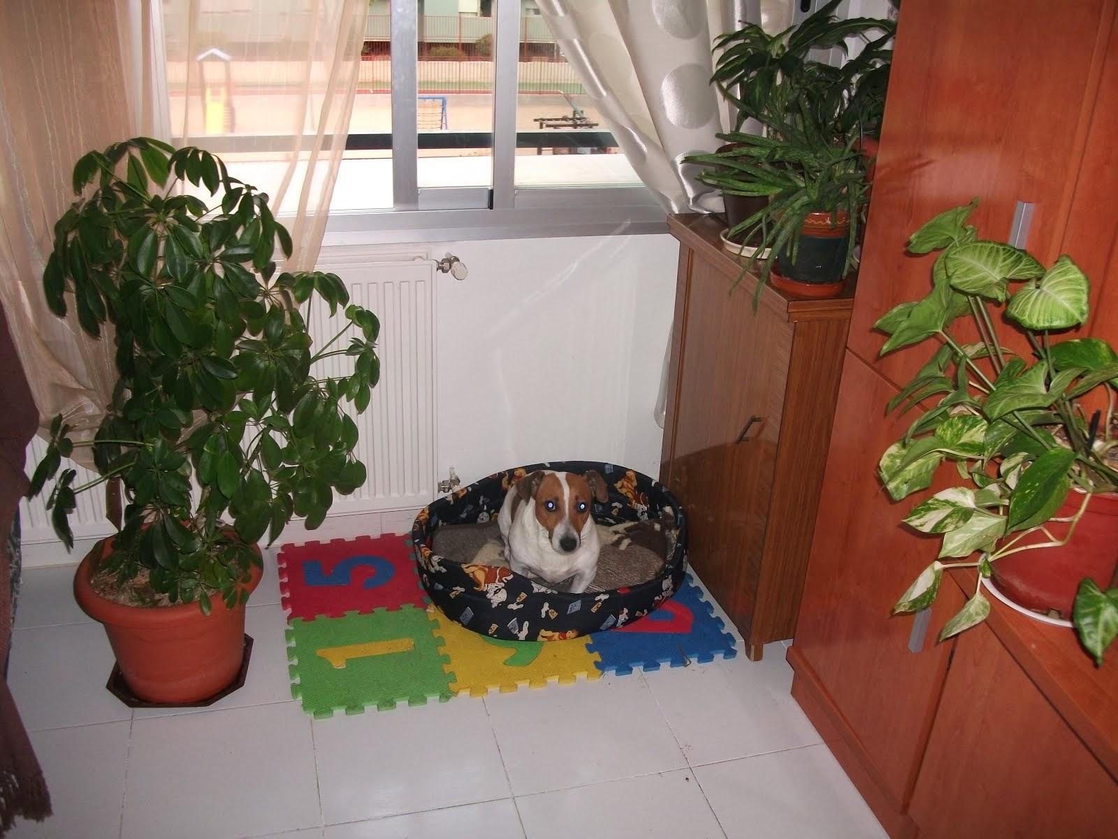 en mi casa cuido mascotas